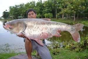 best of To humans carp injuries Asian