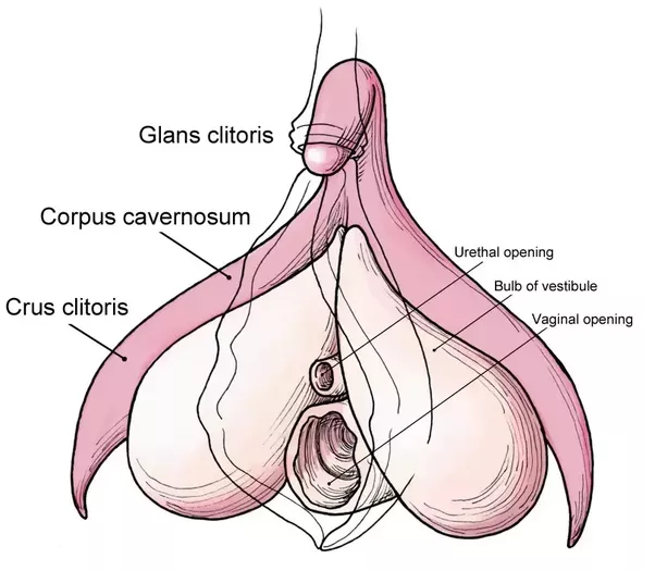 Interference reccomend Damage the clitoris
