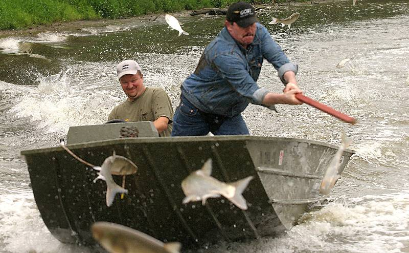 Rainbow reccomend Asian carp injuries to humans