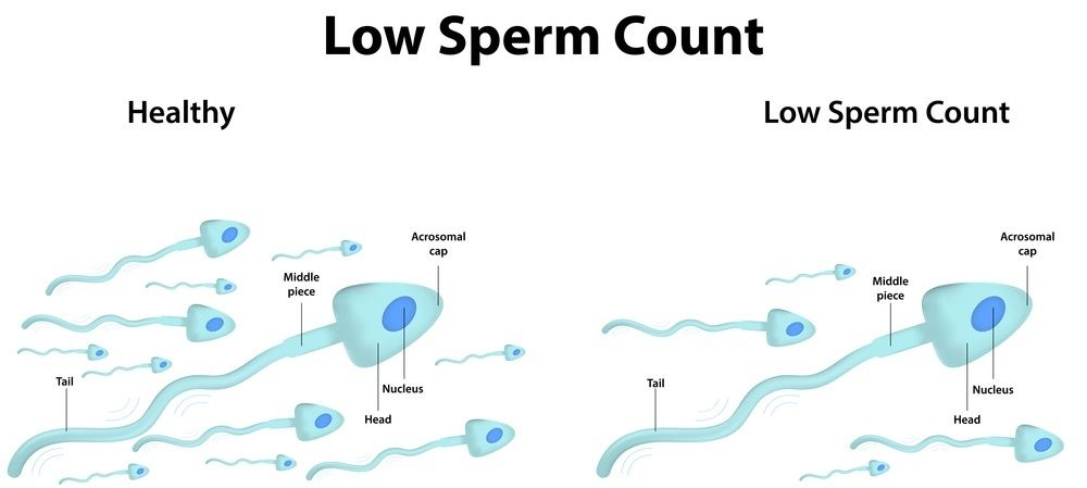 best of Counts Male sperm
