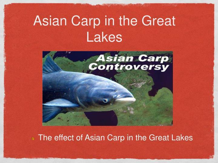 Asian carp ppt