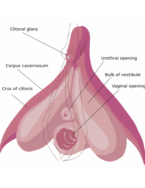 best of Of clitoris Look a large