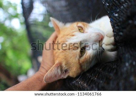 Lem /. L. reccomend Redhead in cage